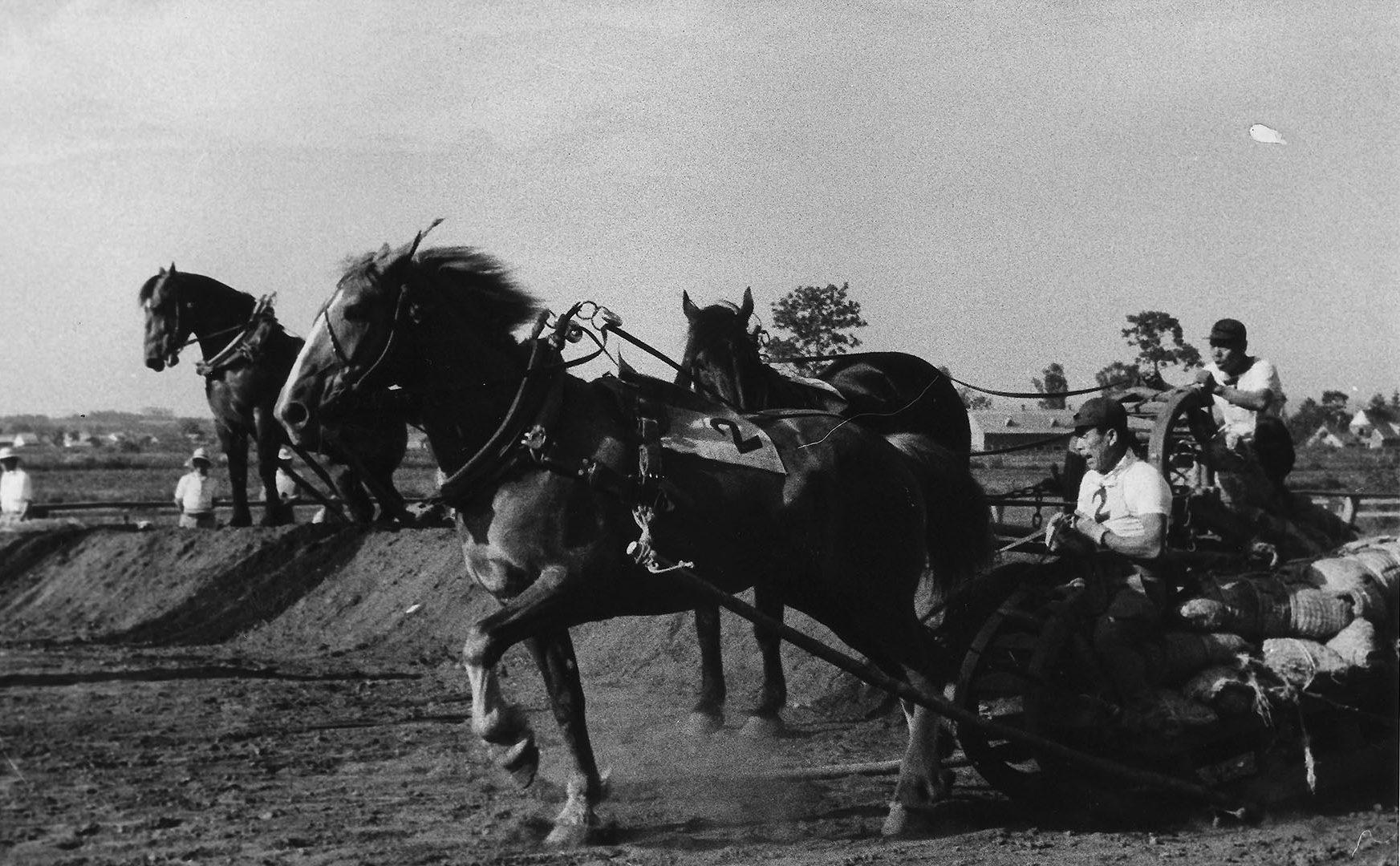 人と馬とが一体となる迫力のレース  ばんえい競馬はどうして生まれた?