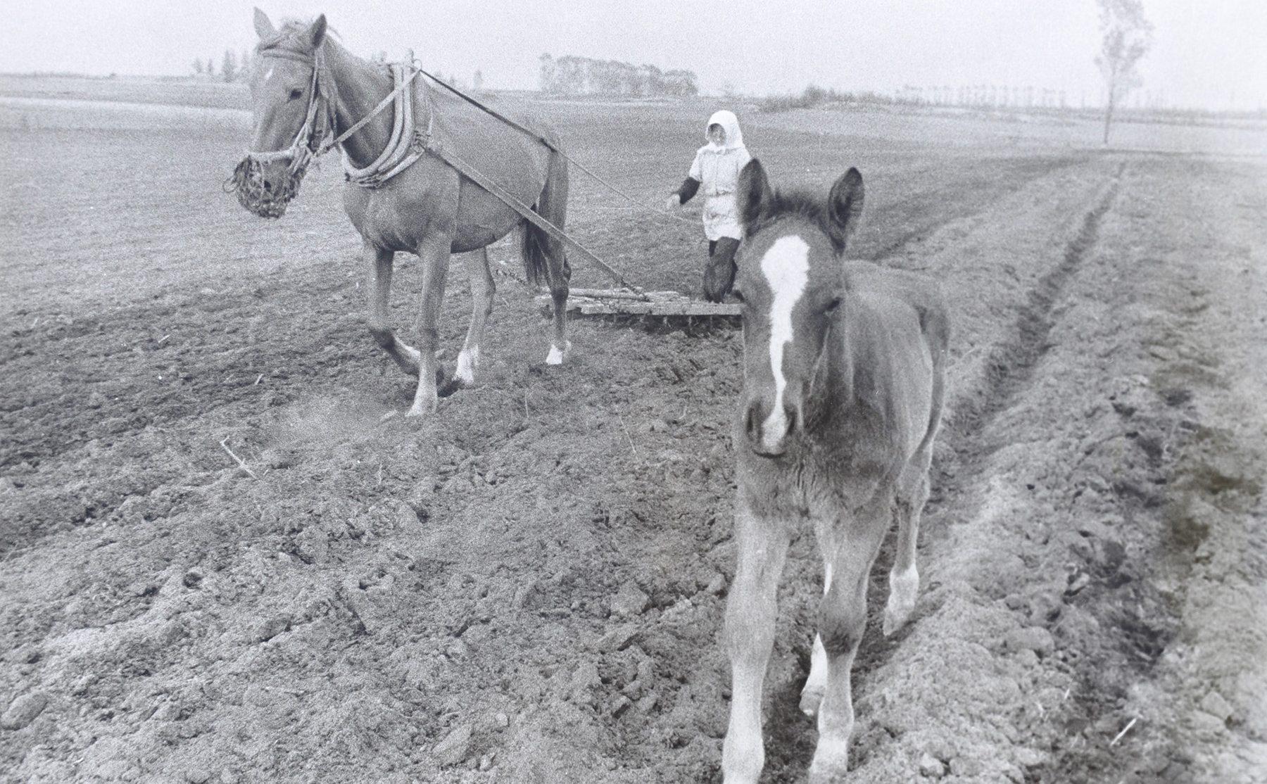 人と馬はいかに関わってきたのか~十勝における馬の歴史を紐解く~