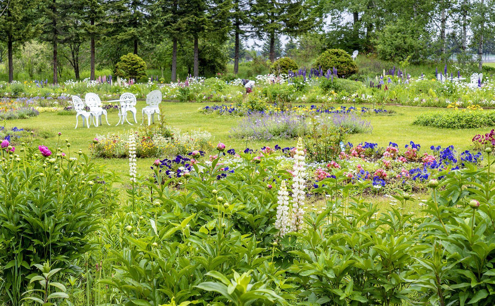 肥料も水やりもしない奇跡の「紫竹ガーデン」はいかに誕生したのか?