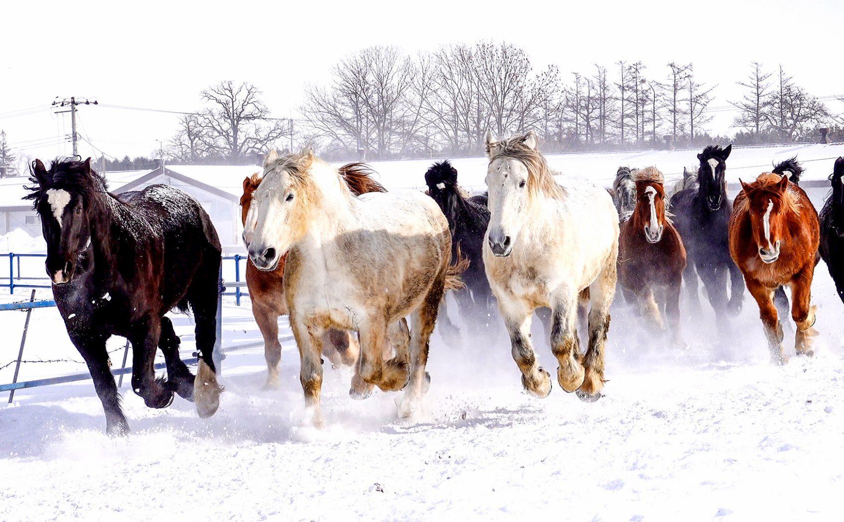 白樺並木や馬追い運動など……「十勝牧場」の見るべきポイントとは
